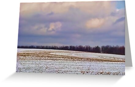 Winter in the Corn Field by vigor