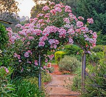 Sparieshoop Climbing Rose by Elaine Teague