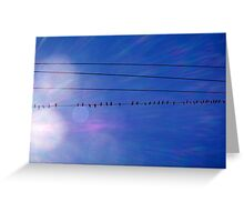 Pigeons On A Wire - 08 12 12 Greeting Card