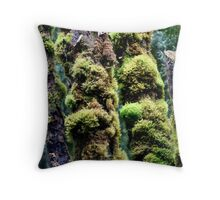 Moss covered rainforest trees. Southwest National Park, Tasmania Throw Pillow