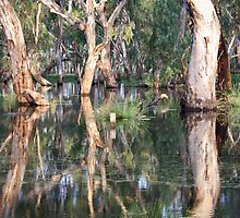 Flooded Forest- Outside Wangaratta, Victoria by PepperPotPics