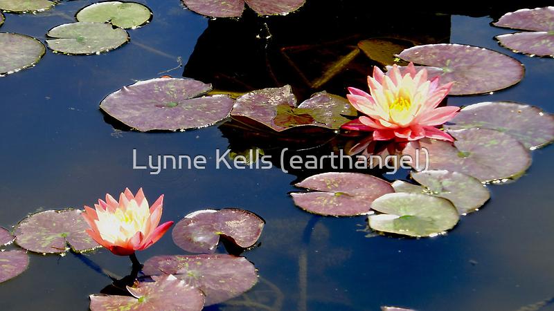 Chocolate Lily by Lynne Kells (earthangel)