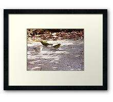 117/365  birds....there are always birds... Framed Print