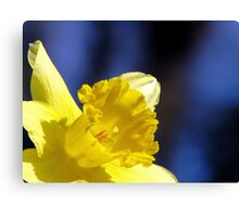 Spring In The Spotlight Canvas Print