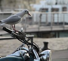 Biker Bird! by Pamela Jayne Smith