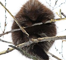 Prickly cuddly by Heather King
