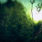 Winter's sun by JanneO