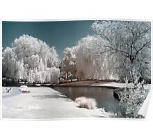Willows & Water infrared Poster