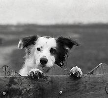Guarding the fence by Karen Havenaar