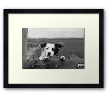 Guarding the fence Framed Print