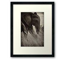 Protector- Masai Mara Kenya Framed Print