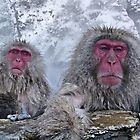 Snow monkeys relaxing in the hot springs by Istvan Hernadi