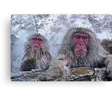 Snow monkeys relaxing in the hot springs Canvas Print