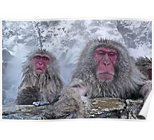 Snow monkeys relaxing in the hot springs Poster