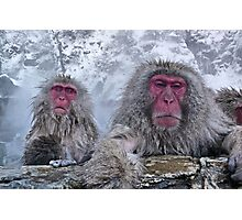 Snow monkeys relaxing in the hot springs Photographic Print