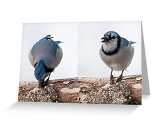 Smart Blue Jay ~ Best Viewed Large Size Greeting Card