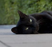 black cat by MichaelK