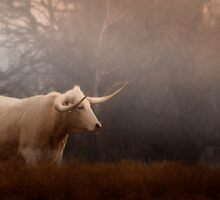 Longhorn Beauty by kristijohnson
