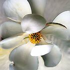 Flowers by Savannah Gibbs