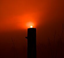 Sun, Sitting on a Fence Post by finsphotos