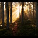 Mystical Forest by Andreas Stridsberg