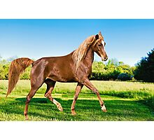 Horse dance in the meadow Photographic Print