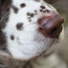 Can you smell something? by OaklandPhoto