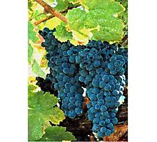 Grapes Fruit On The Vine Print, Poster & Card Photographic Print