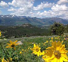 Beartooth Blooms by JPMcKim