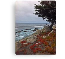 Seaside Cypress Canvas Print