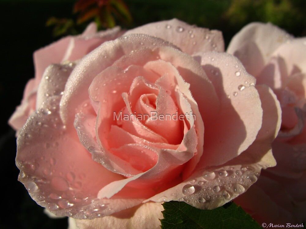 The quaintness of raindrops by MarianBendeth