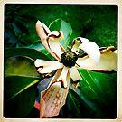 Magnolia Part I by Marita