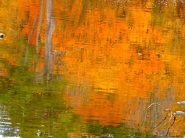 The watery easel of October by MarianBendeth