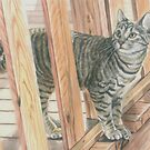 Indoor Cat Outside by JohnnyMacK