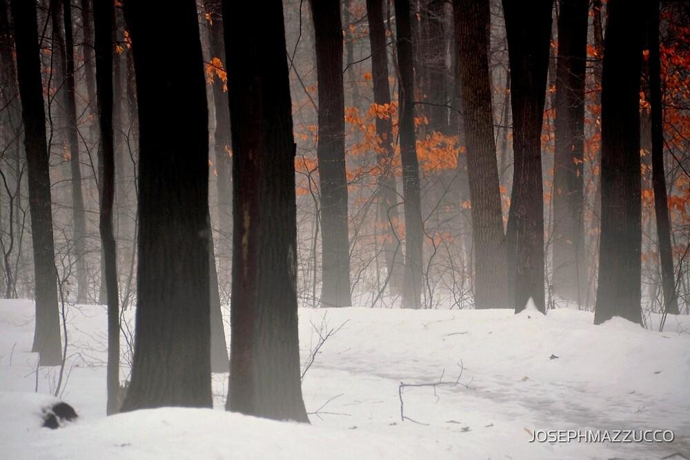 Winter Woods... by JOSEPHMAZZUCCO