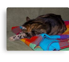 Jimmy Cat. Asleep in his favourite spot.  Canvas Print