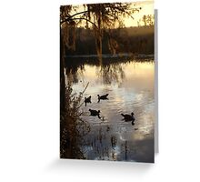 MUSCOVY DRAKES ON ECONFINA CREEK Greeting Card