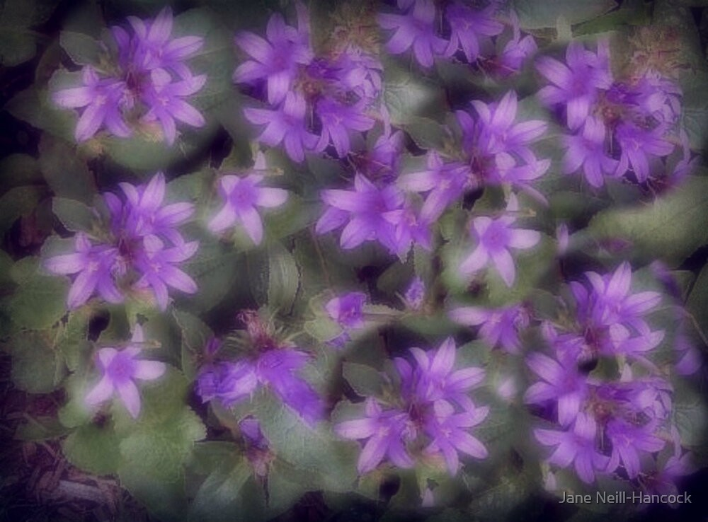 Delicate Lavender Petals by Jane Neill-Hancock