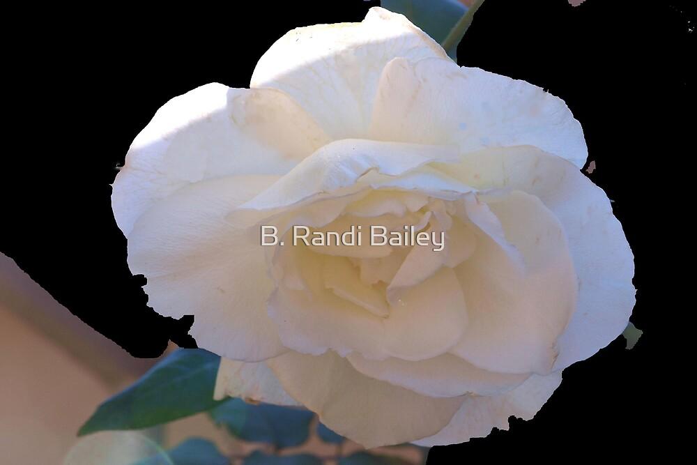 Spotlight rose by ♥⊱ B. Randi Bailey