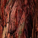 Redwood Bark (Macro) by ZWC Photography
