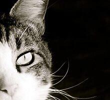 Wishful Kitty by Cindy-Lou Holland