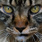 Ty Up Close by Cindy-Lou Holland