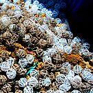 Odd Jumble - Plastic Spheres by waddleudo
