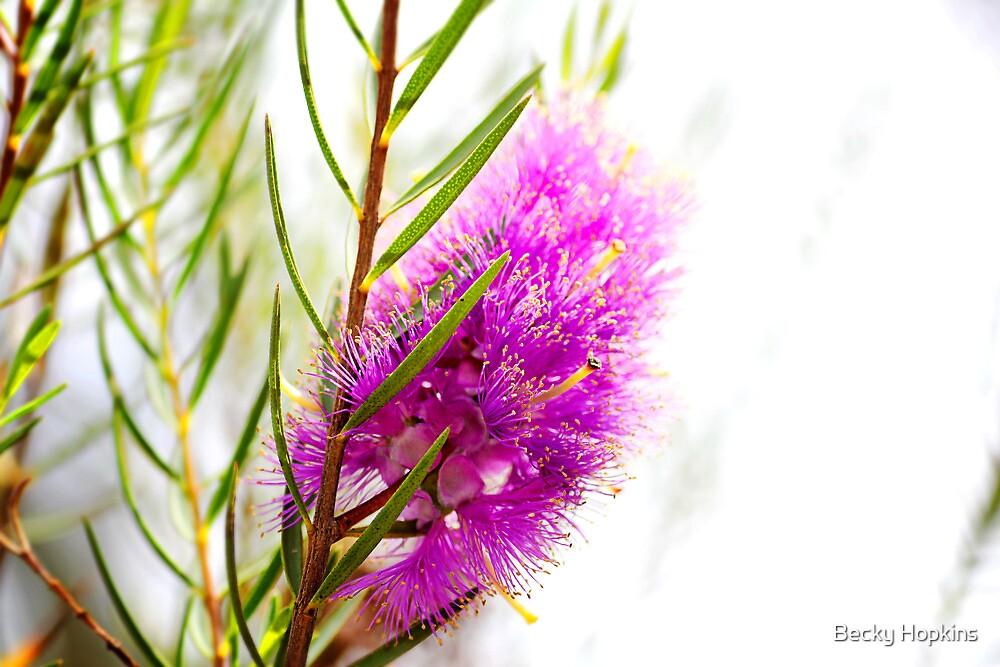 Purple Fluff by Becky Hopkins