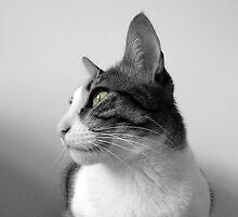 Peaceful Cat by Silvia Neto