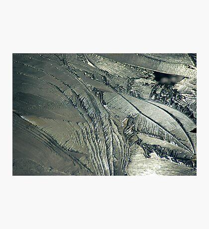 Contrast on Ice - II Photographic Print