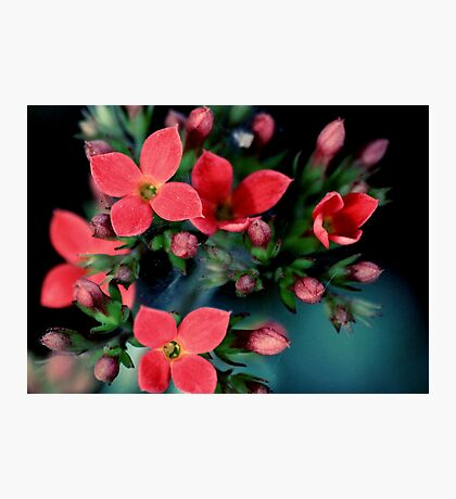 Liitle Red Flowers Photographic Print