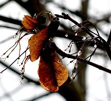 autumnal seeds lingering on~ by Brandi Burdick