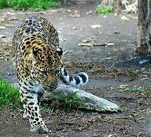Amur Leopard by Henrik Lehnerer