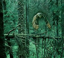 Owl Out of Green Forest by MaureenTillman